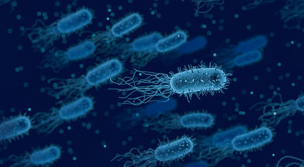 melatonin and microbes for travelers