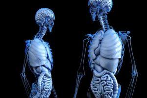 anatomy colon